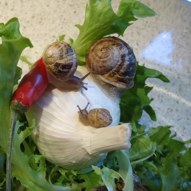 Simpson Snails